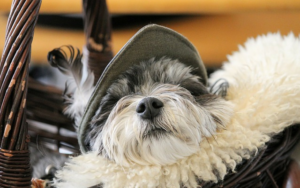 dog dry nose treatment